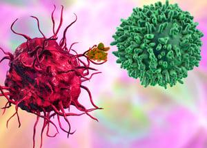 innate T-bethigh memory-phenotype CD4+ T lymphocytes